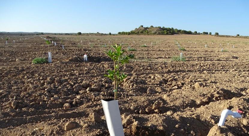 Nuevas ampliaciones regadíos ilegales dentro Red Natura 2000 Campo Cartagena