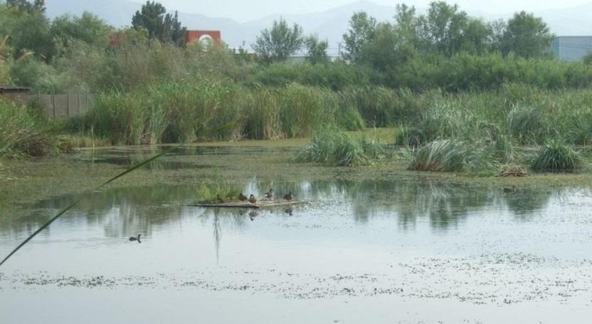 Andalucía destaca actividades educación ambiental desarrolladas humedal Charca Suárez