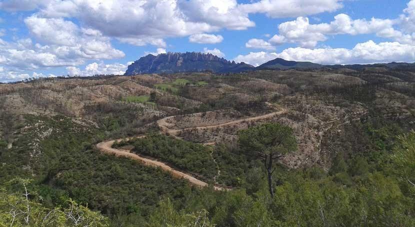 marcha actuaciones hidrológico-forestales paliar daños incendio Ponferrada