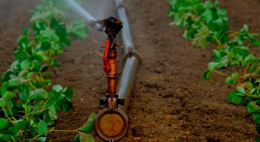 consumo agua regadío Huelva se dispara 407% últimos 20 años
