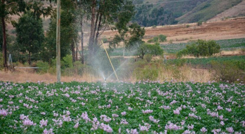 Bolivia gestiona al menos 50 obras hídricas asegurar riego 3.000 hectáreas