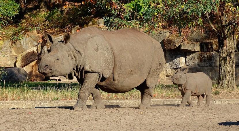 lluvias e inundaciones India ponen peligro santuario rinocerontes unicornio