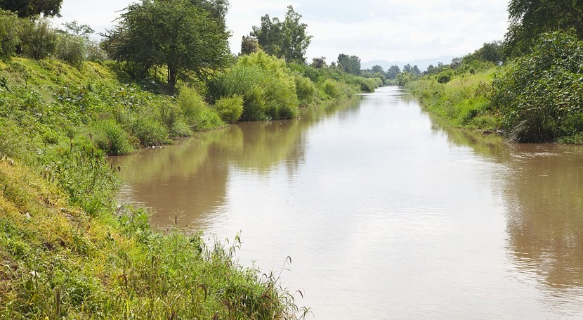 contaminación ríos favorece presencia gusano ancla peces agua dulce