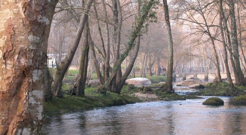 ¿Que hongo provocó enfermedad alisos que afectó varios ríos cuenca Miño-Sil?