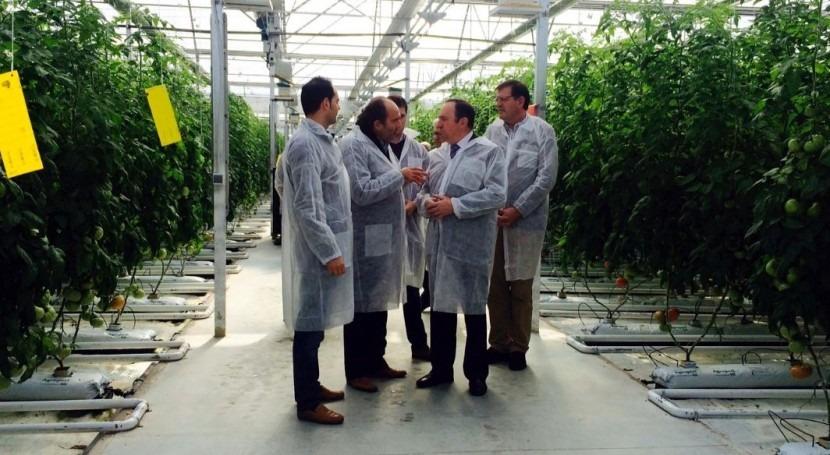 Riojaselecto: innovador sistema cultivo tomate invernadero mediante sistema hidropónico