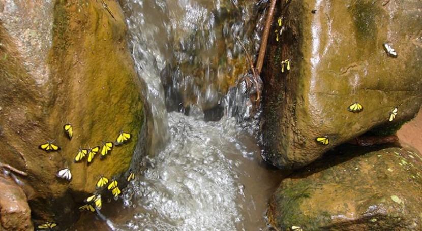 ¿Qué papel juega biodiversidad mitigación cambio climático América Latina?