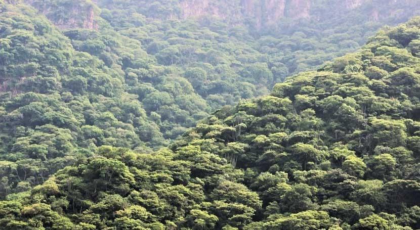 selva seca, trópico y desierto