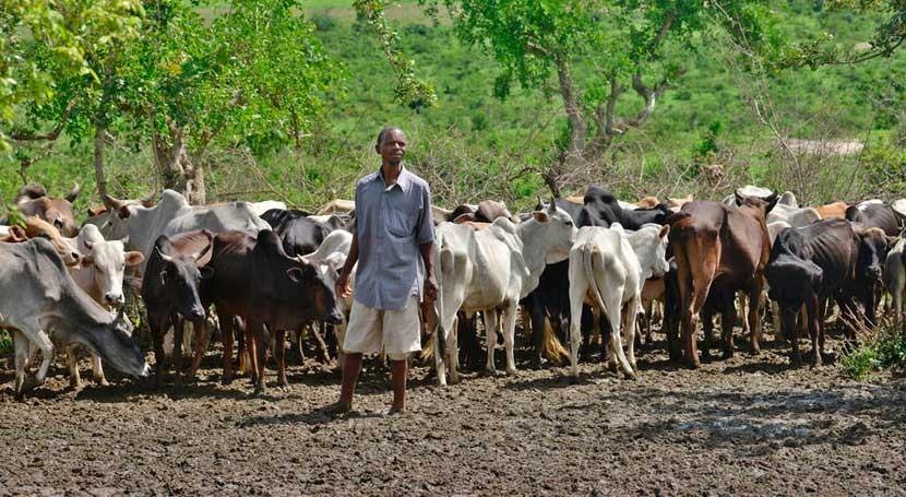 escasez lluvias África tercer año consecutivo agrava situación alimentaria
