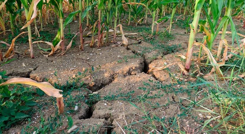 agricultores Alpujarra granadina y Costa Tropical, jaque sequía
