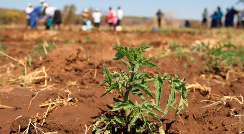 Caribe debe prepararse mayores sequías debido al cambio climático