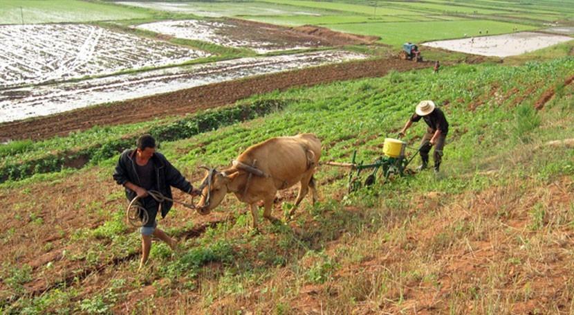 sequía hace descender producción alimentaria Corea Norte primera vez 2010