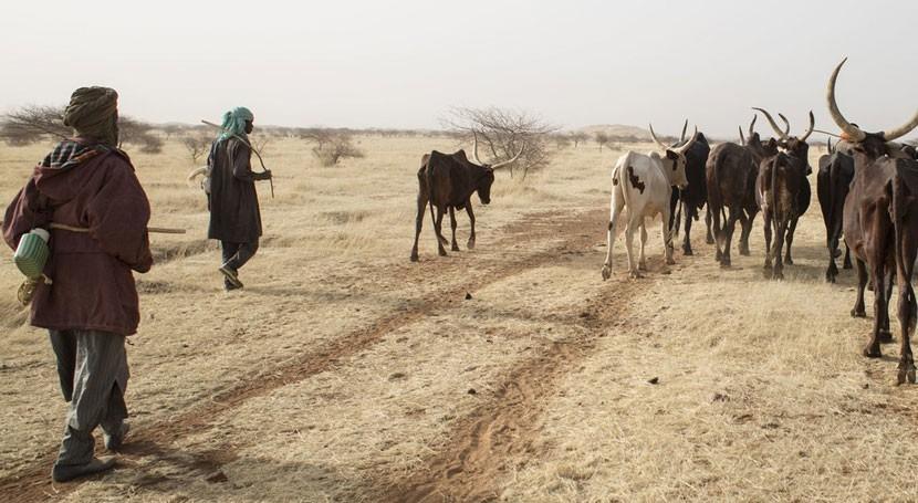 desertificación, herida abierta nuestro consumo