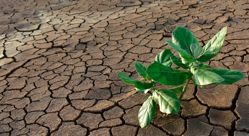 teledetección, aliada lucha sequía