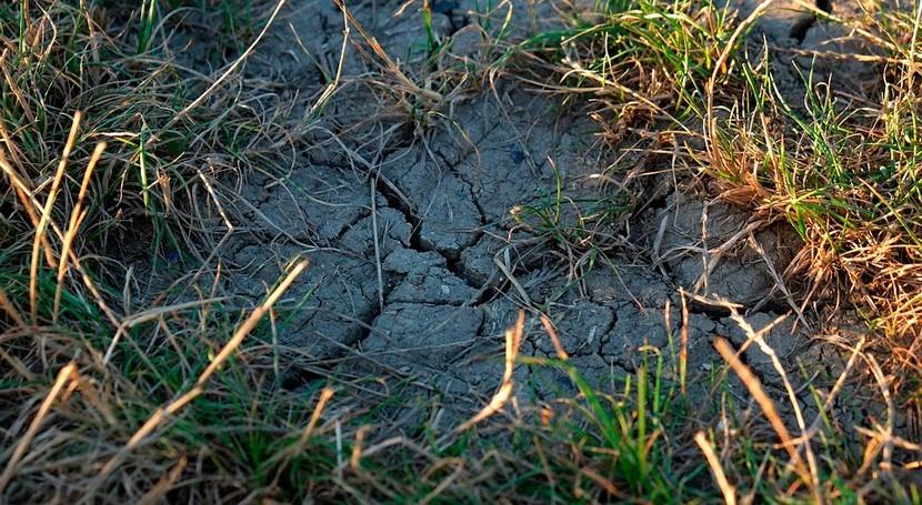 ¿Cuáles son claves adaptación plantas sequía?