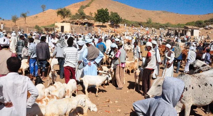 sequía Somalia hace huir más 3.000 personas cada día hogares