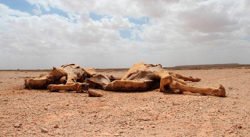 sequía Somalia obliga decenas familias huir busca agua y alimentos