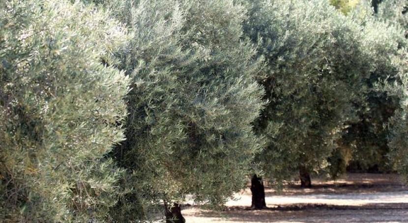 ayudas paliar sequía cultivos secano Comunidad Valenciana ascienden 8,77 millones euros