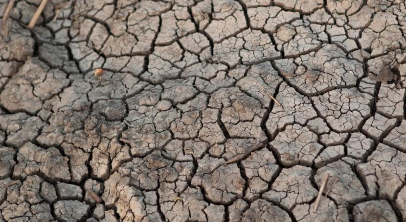 afrodescendientes deben tener participación esfuerzos controlar cambio climático