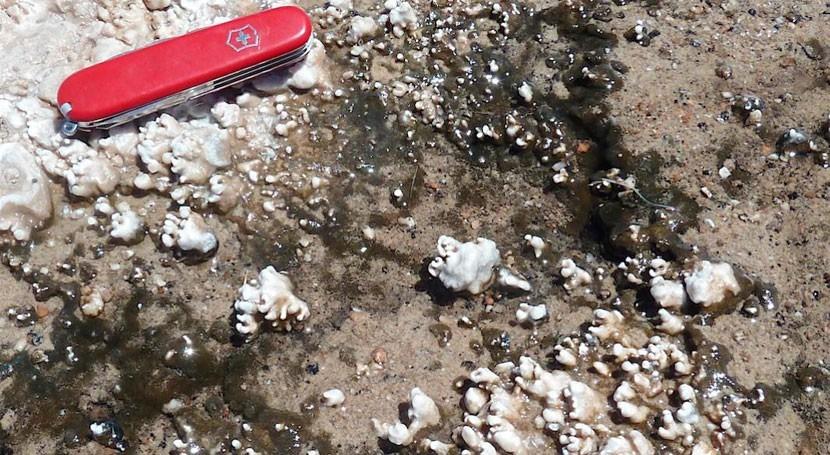 descubrimiento aguas termales Chile cuestiona huellas vida halladas Marte