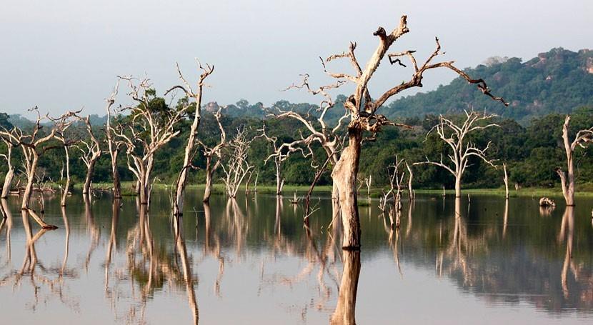 Al menos 146 muertos y casi medio millón desplazados lluvias torrenciales Sri Lanka