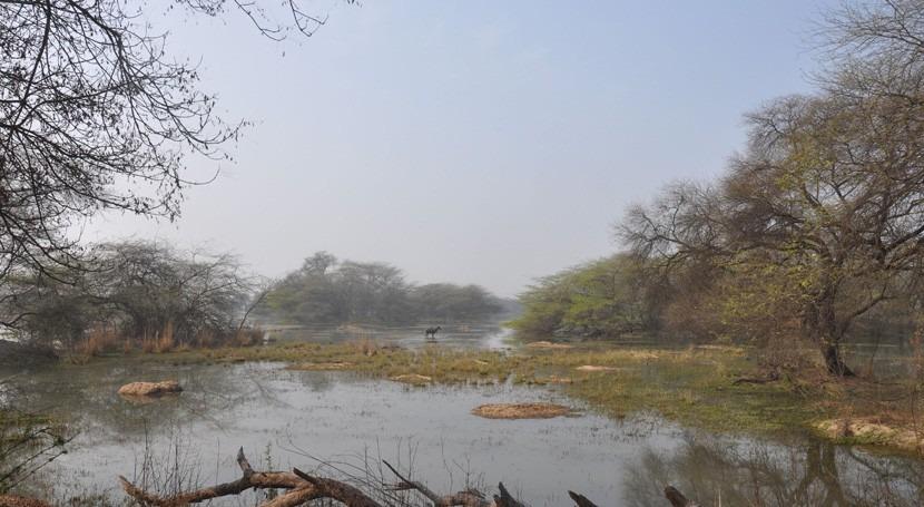 India agrega cuatro nuevos Humedales Importancia Internacional Lista Ramsar