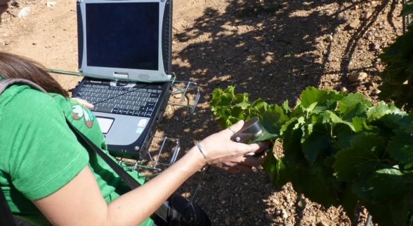 SUNI, herramienta que mide humedad hoja vid manera no invasiva y portátil