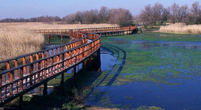 humedales españoles albergan 40% aves que invernan Mediterráneo occidental