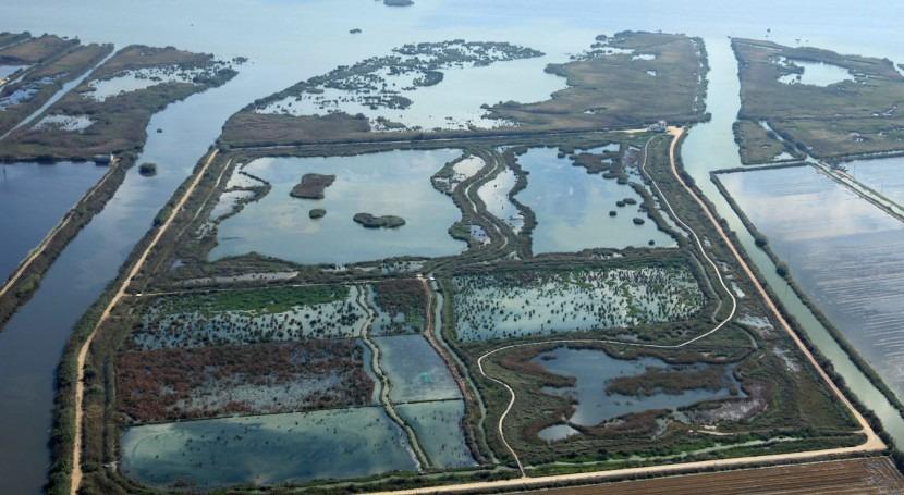 ¿Pueden ayudar humedales artificiales depurar agua l´Albufera?