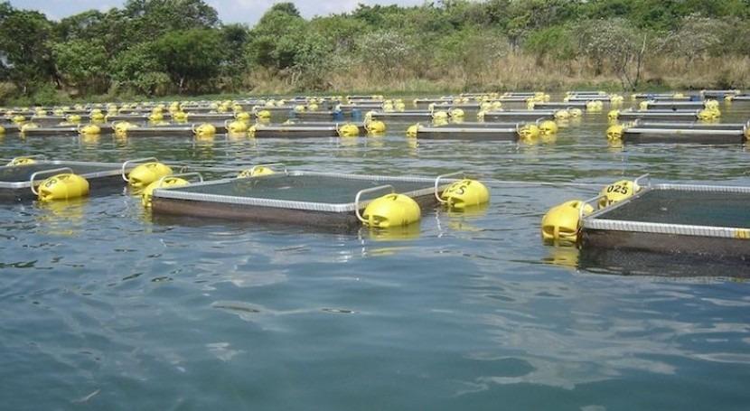 Tratamientos anti incrustantes jaulas red piscifactorias