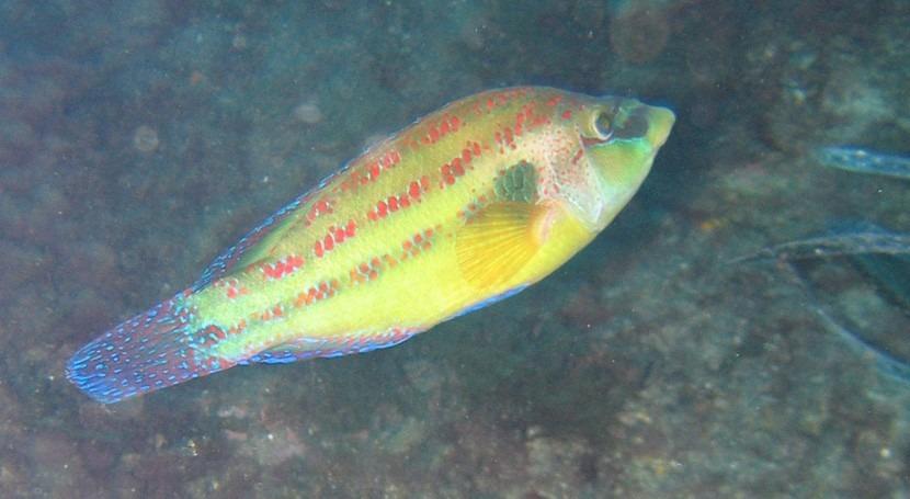 olor agua modifica comportamiento peces