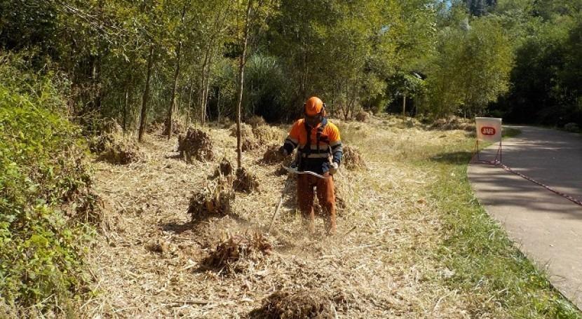 Control y eliminación Cortaderia selloana superficie 3500 m² río Cadagua, Zalla