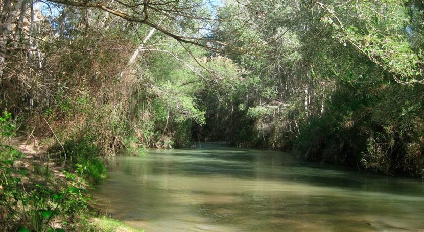 Murcia favorece colonización bosque ribera río Segura especies autóctonas