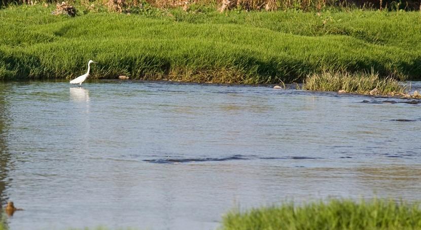 Comienzan pruebas mejora ambiental tramo final río Llobregat