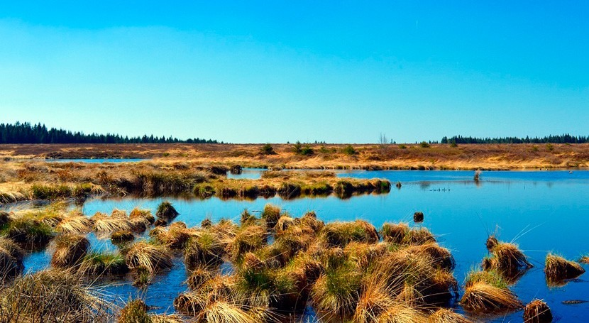 ¿Cómo afecta cambio climático bosques tropicales pantanos turba?