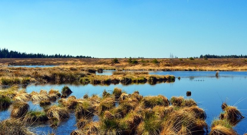monitorización humedales, útil predicción tasa cambio climático
