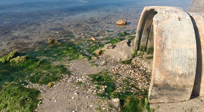 vigilancia microalgas Mar Menor estará operativa fin temporada baño