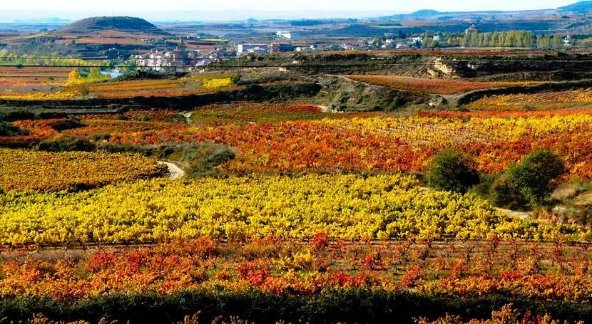 viñedo DOC Rioja, condicionado sequía y altas temperaturas