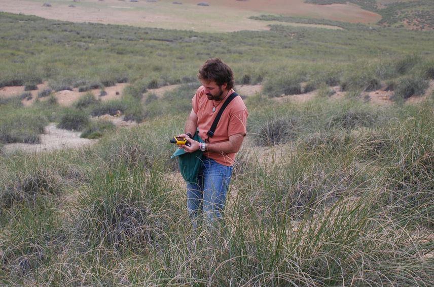 Describen un patrón común de biodiversidad en zonas semiáridas que ayudará a frenar la desertificación